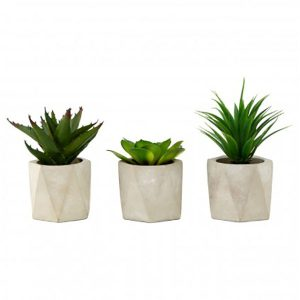 Set of 3 Plants