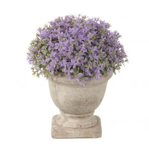 purple potted dianthus
